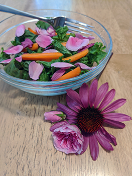 Pink echinacea and rose petals sprinkled into a simple green salad.