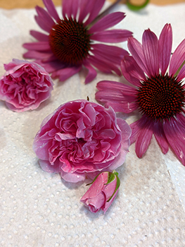 Pink echinacea and rose flowers washed and drying on paper towel.