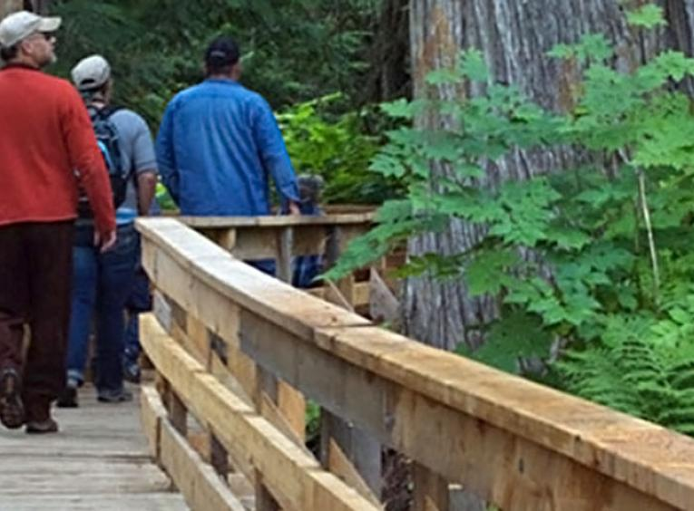 People walking on a boardwalk through a forest.