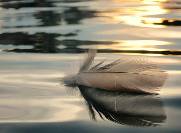 A feather floats on calm water.