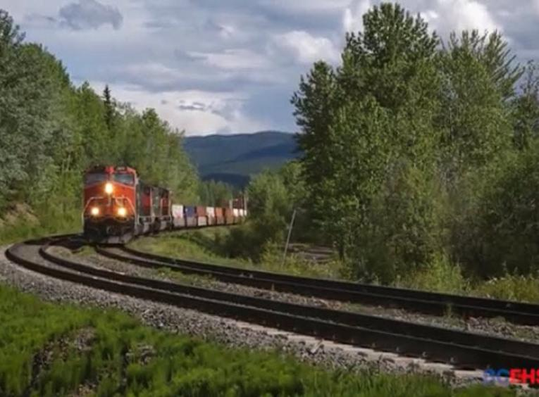 CN train with forest surroundings.