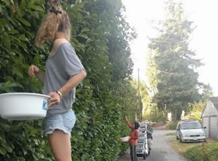 Girl on a ladder picking blackberries and putting them in a white bowl.