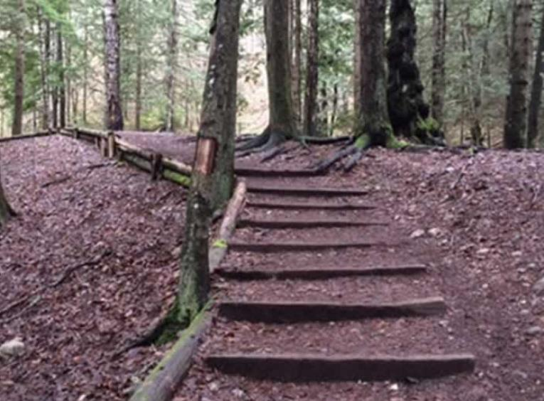 Path with wood stairs in the forest.