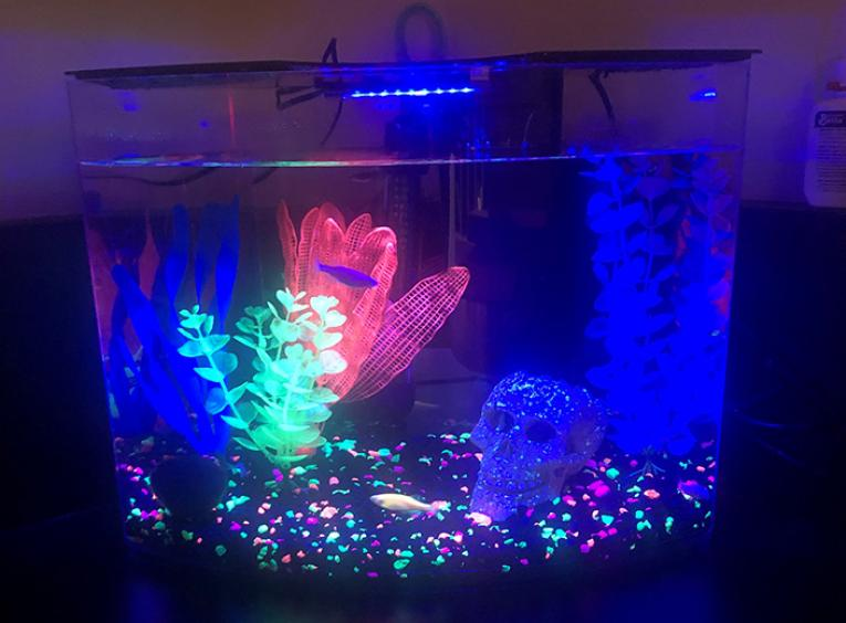 A dark fish tank with two glofish and glowing, fluorescent decor.