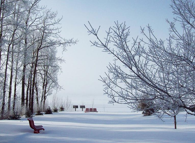 A snowy area, surrounded by trees, leading to a frozen, snow covered lake.