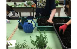 Children planting herbs in a school classroom